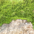Stock Photo: Green vines natural stones