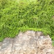 Green vines natural stones — Stock Photo