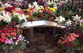 Flower garden — Foto Stock