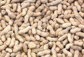 Groundnut — Stock Photo