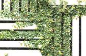 Rampicante verde — Foto Stock