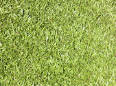Fond herbe — Photo