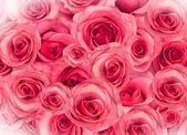 背景下的玫瑰 — 图库照片