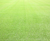 Green grass background. Top view — Stock Photo