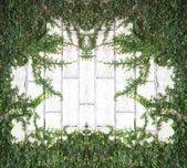 Trepadeira verde — Fotografia Stock