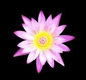 Lotus flowe — Stock Photo