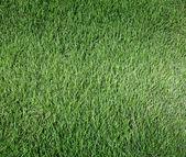 газон — Стоковое фото