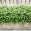 Bushes fence leaves green — Stock Photo #48660733