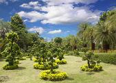 Giardino dei bonsai — Foto Stock