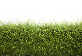 Bushes fence leaves green — Stock Photo