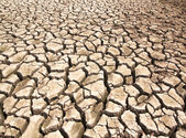 Drought breaks ground fissures — Stock Photo