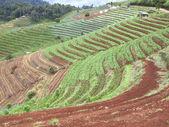 Scaletta di colline di terreni agricoli — Foto Stock