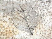 Leaf cement — Stock Photo