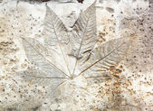 Leaf cement — Stockfoto