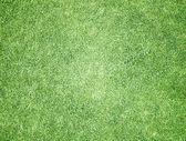 поле зеленой травы — Стоковое фото