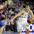Dimitris Diamantidis of Panathinaikos - Stock Photo