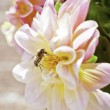 Garden Bee — Stock Photo