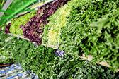 Fresh greens — Stock Photo