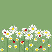 Chamomile flowers on green background — Stock Vector
