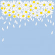 Royalty-Free Stock Vector Image: Lot of white daisies with petals