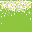 Many white daisies on green background — Stock Vector