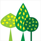 Ornamental trees with green leaves on white background — Vector de stock