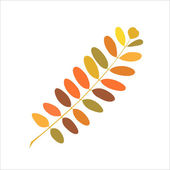 Autumn branch of acacia — Stock Vector