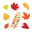 Stockvektor : Set of different autumn leaves
