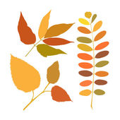 Set of different branches of autumn — Vettoriale Stock