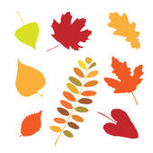 Set of different autumn leaves — Vettoriale Stock