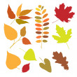 Set of autumn leaves isolate — Vector de stock #35396371