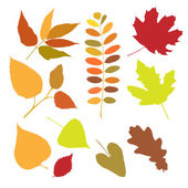 Set of autumn leaves isolate — Vector de stock