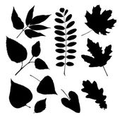 Set of silhouettes of different leaves — Stok Vektör