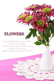 Fresh chrysanthemums in a vase on a white background — Stock Photo