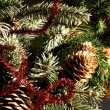 Branch of a christmas tree with fir-cones — Stock Photo