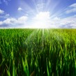 Stock Photo: Green field, blue sky and sun on summer