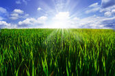 Green field, blue sky and sun on summer — Stock Photo