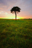 Tree in sunrise — Stock Photo