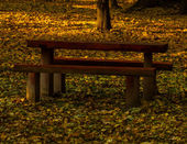 Autumn landscape with bench — Stock Photo