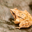 Close-up from a yellow frog — Stock Photo #18184707