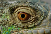 Green iguana eye — Stock Photo