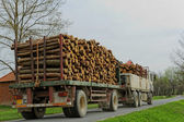 Timber truck carrying — Stock Photo