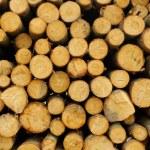 Wood stack — Stock Photo