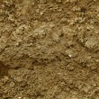 Mud texture — Stock Photo