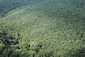 Aerial view of a forest — Stock Photo