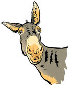 Illustration of donkey — Stock Photo