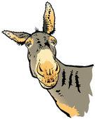 Illustration of donkey — Stock Photo