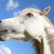 Stock Photo: Horse in sky