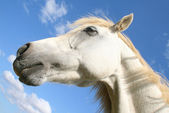 Horse in the sky — Stock Photo