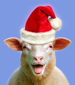 Sheep in christmas fever — Stock Photo